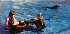 Therapy in the Water with Dolphins  Tenerife, Canary Islands