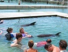 Therapy in the Water with Dolphins   Grand Bahama Island